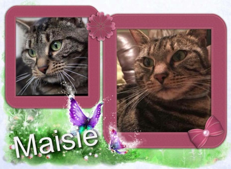 ***Now Reserved *** Can you offer beautiful Maisie a forever home.