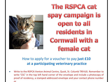 Spay your female cat for £10 rspca campaign cornwall