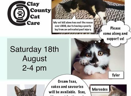 Cat Tea Party Saturday 18th August