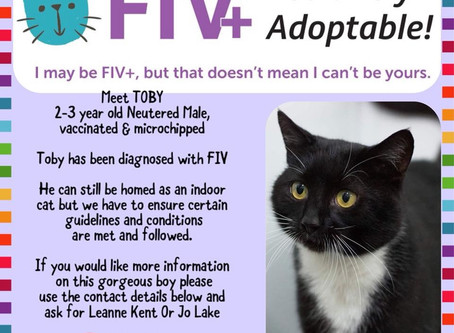 Can you please help us find a purrfect forever home for Toby?