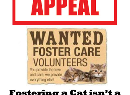 Urgent appeal for fosterers