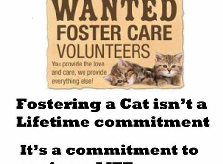 Interested in becoming a cat fosterer?