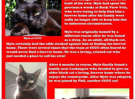 December 6th; Mylo 25 CCCC Cats Of Christmas.