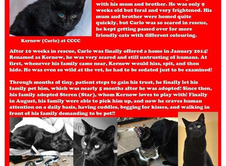 December 24th; Kernow (Carlo) 25 CCCC Cats Of Christmas.