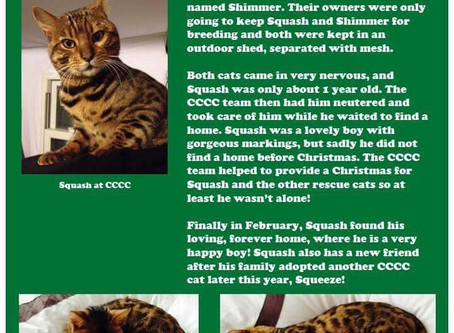 December 11th; Squash 25 CCCC Cats Of Christmas.
