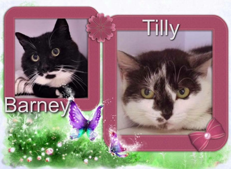 Barney & Tilly