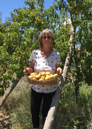 Peach Tree guild planted in 2008. Abundant peaches and perennial growth, ten years later as seen in this photo in 2018, with Deborah Littlebird harvesting peaches.