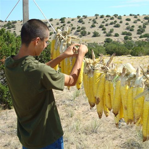 Pueblo youth learning to dry corn and make chicos.
