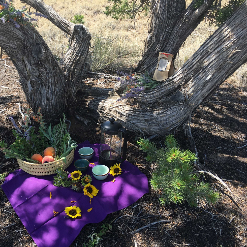 Tea Sanctuary under Juniper Shelter