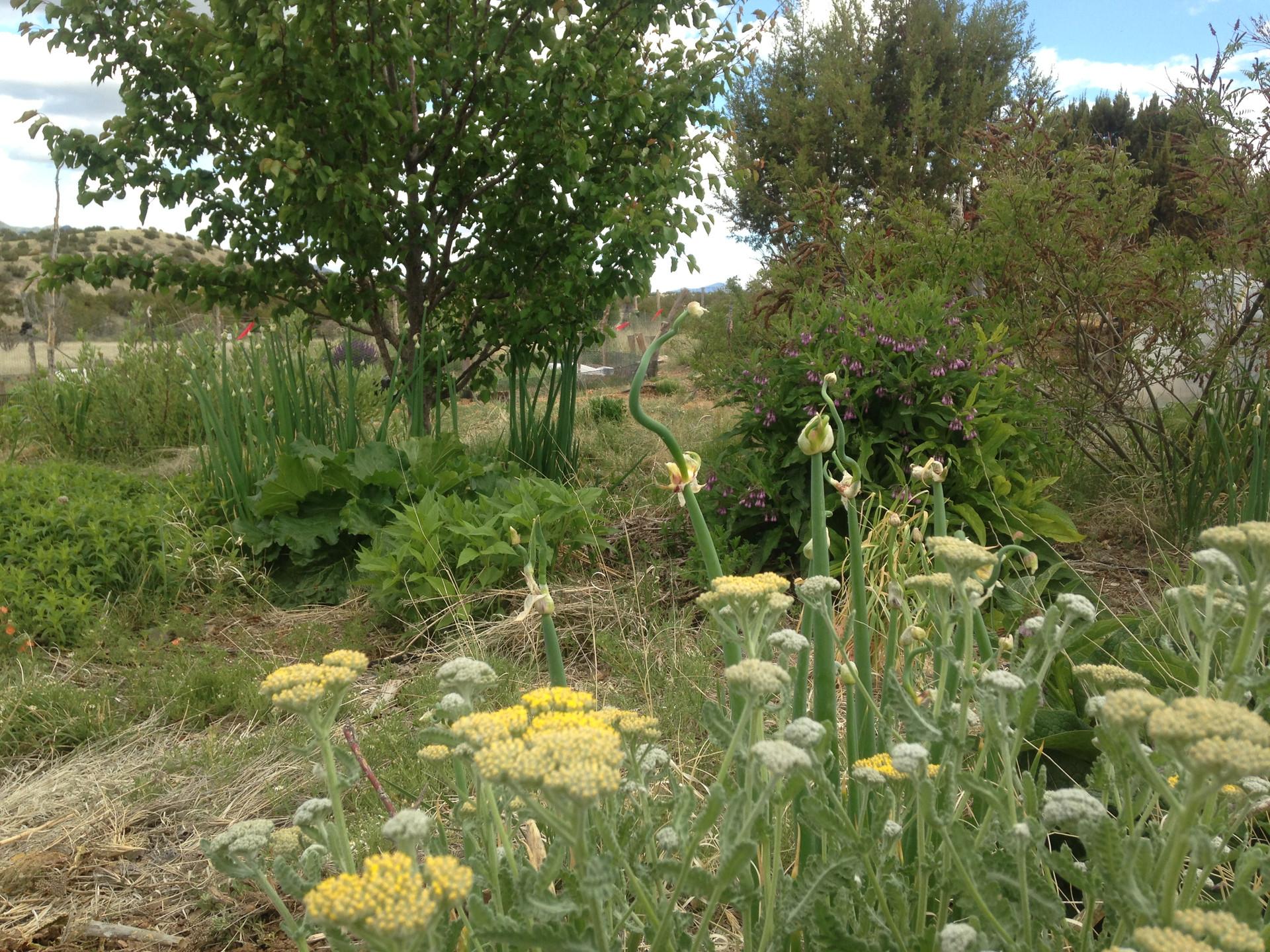 Tano Farm Food Garden
