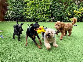 Dog Day Care Farnborough