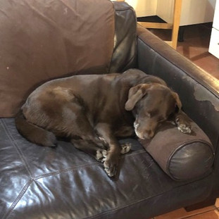 Dog Home Boarder Knockholt