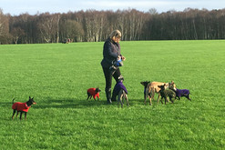 Small Breed Dog Walker