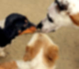 Dog Walker Farnborough, Dog Walker Southwood, Dog Walking, Dog Walker Hawley, Dog Walking Mytchett