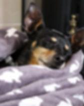 Dog Home Boarder Farnborough GU14