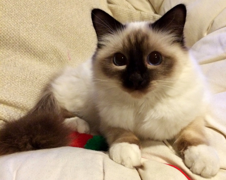 Cat Visits Farnborough