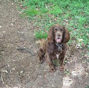 Dog Home Boarding Tunbridge Wells