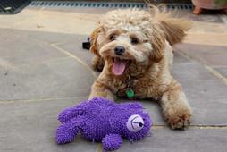 Dog Home Visits