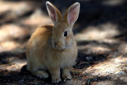 Rabbit Visits Farnborough