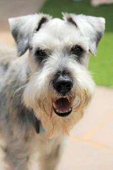 Doggy Day Care Farnborough