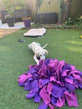 Igoe Dog Toys