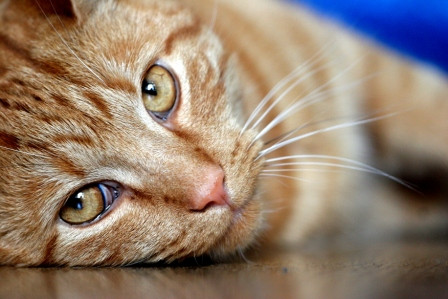 Cat Feeding Farnborough GU14