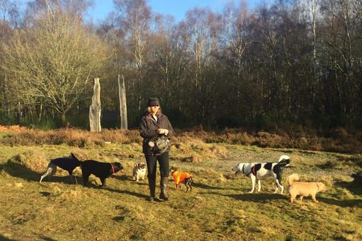 Training Dog Walker