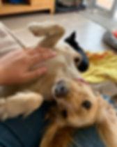 Dog Day Care Farnborough GU14