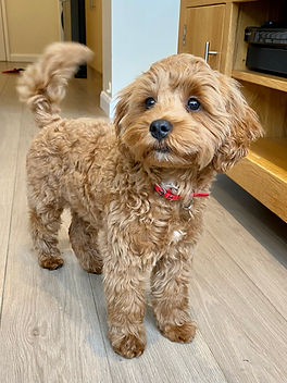 Puppy Home Visits GU14
