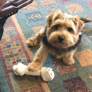 Dog Home Boarding Tonbridge