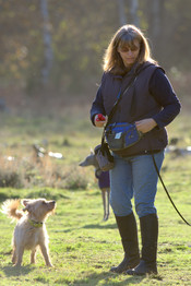 Small Breed Dog Walker