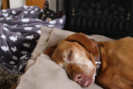 Small Dog Home Boarder
