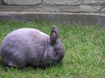 Bunny Feeding GU14
