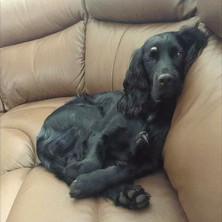 Dog Home Visits GU15