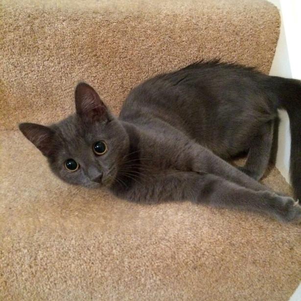 Kitten Visits GU14