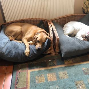 Dog Home Boarding Shoreham