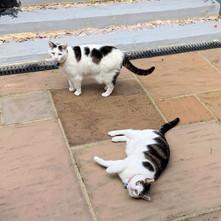 Cat Feeding and Visits GU15