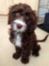 Puppy Visits GU14
