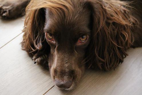 Dog DayCare for Smaller Breeds