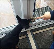 Dog Walker North Camp, Pet Sitter Farnborough, Dog Daycare Farnborough, Dog Home Boarding Hampshire, Berkshire