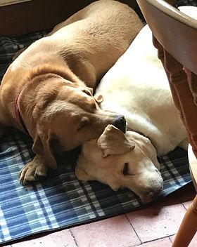 Dog Sitter TN15, TN16