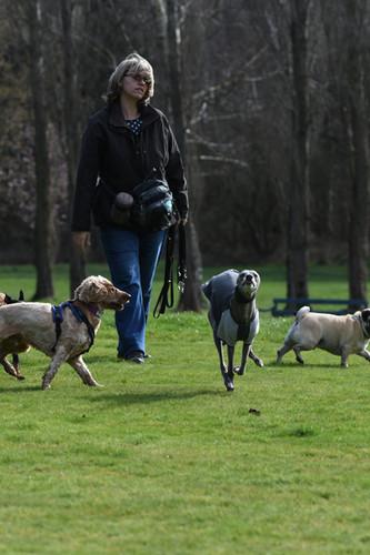 Dog Walker Farnborough
