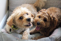 Doggy Day Care for Smaller Breeds