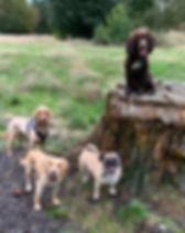 Dog Walker Farnborough GU14