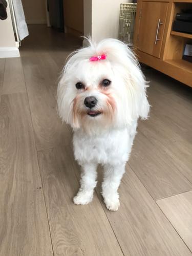 Maltese Doggy Day care