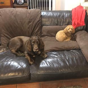 Dog Day Care Westerham