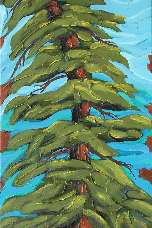 Leaning Pine  12X24C3