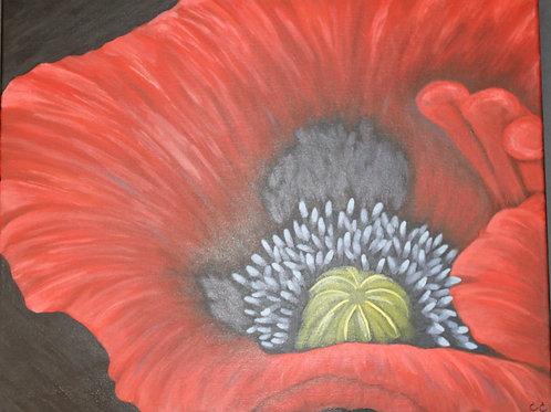 Red Poppy  16X20C2