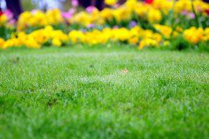 3 Must-Do Spring Landscaping Tasks