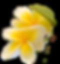 IMG-20200219-WA0002_edited_edited.png